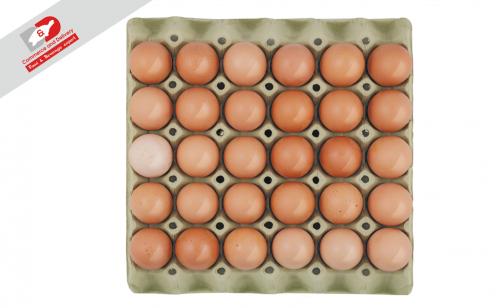 Eggs L