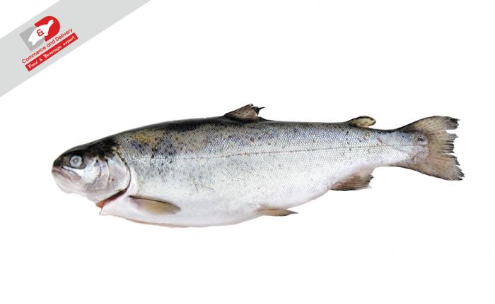 Fish trut frozen D&D
